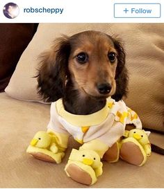 I refuse to dress up my dog like this.. IT IS A DOG