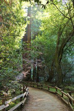 Muir Woods, CA. Priceless. #californialove #wild