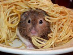 Heehee! Spaghetti Rat! *Slurp*