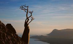 Uma rosa-do-deserto se agarra ao penhasco Maalah, juntamente com mais de 300 outras espécies vegetais raras que se encontram em Socotra.