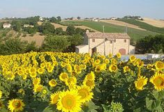 Le Marche near Ostra Vetere  Rented this house two times with my family