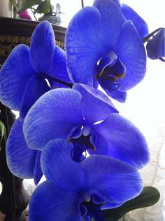 Unknown, Orchidee on ArtStack #unknown #art