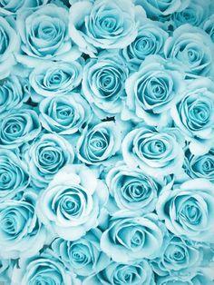 Fresh Flowers: aqua blue roses