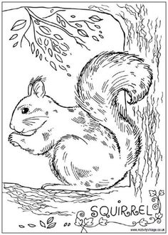 realistic squirrel coloring pages for adults