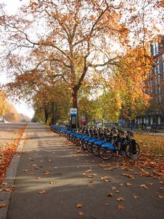 Bikes for hire Kensington Gardens, London