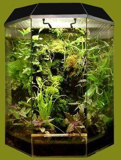 Флорариумы Орхидариум Палюдариум . - Искала животных ростения Флорариумы Орхидариум Палюдариум - Цветочный блюз