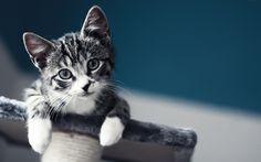 lindo-gatito-bebé-kitty-cute-baby-cat-1920x1200-wallpaper-.jpg (1600×1000)