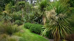 Flaxmere Garden Website New Zealand Natives - garden Landscape design Bush Garden, Garden On A Hill, Garden Shrubs, Garden Trees, Terrace Garden, Garden Landscaping, Landscaping Design, Small Garden Ideas New Zealand, Garden Ideas Nz
