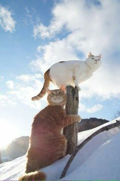 two cats pair snow winter outside