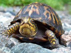turtle - Google Search