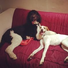 """""""Animal Planet went to commercial break which means it's WRESTLE TIME."""" 