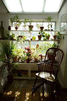 window of green: plants on wall shelves