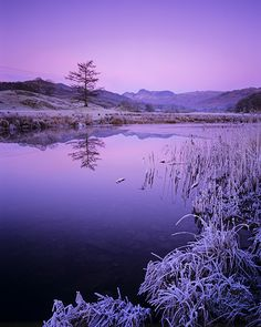Frozen in Pink: Photo by Photographer Barry Wakelin - photo.net