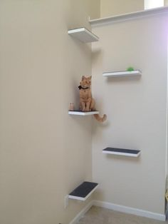 Nail carpeted boards up on a wall to create staggered and anti-slip perches for your cat. You can incorporate your crown molding too. fit for a kitty king! I need this for tequila Kitty King, Diy Cat Tree, Cat Trees, Cat Perch, Cat Shelves, Cat Playground, Cat Room, Cat Condo, Diy Carpet