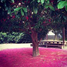 O jambo fez um tapete cor-de-rosa (Foto: Reprodução/Instagram)