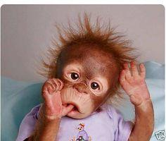 Image detail for -Ashton Drake So Truly Real RISA monkey Orangutan Baby Doll Cute Baby Animals, Animals And Pets, Funny Animals, Baby Orangutan, Chimpanzee, Cute Monkey, Monkey Doll, Cute Animal Pictures, Pet Birds
