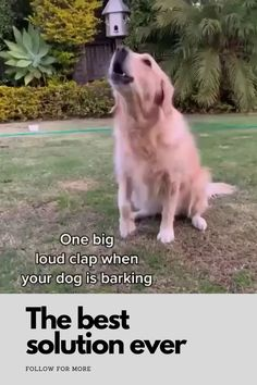 Training Your Dog, Good Things, Dogs, Animals, Animales, Animaux, Pet Dogs, Doggies, Animal