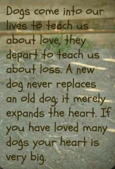 I have loved many dogs over my life.