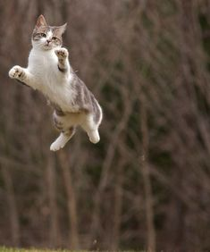These cats are excerpting their natural abilities to jump so high and far that it seems as if they are flying through the air like birds. #catandkitten