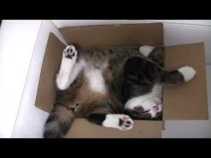 Maru  夜寝る前のまったりモードです。  A relaxed mode before sleeping at night.  http://sisinmaru.blog17.fc2.com/