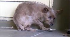 Your Heart Will Break When You See This Terrified Stray Dog... but He Gets the Happiest Ending Ever. :)