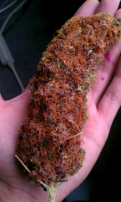 A bud in the hand is worth two in the bush :)