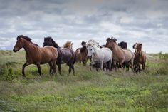 Horse trip by Anna Guðmundsdóttir on 500px.