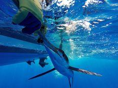 Pescando en Culebra, Puerto Rico
