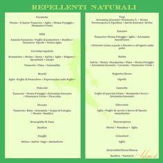 #lifeme: L'ORTO: LA CONSOCIAZIONE E GLI EFFETTI DELLE ERBE SULLE PIANTE VICINE #repellenti naturali