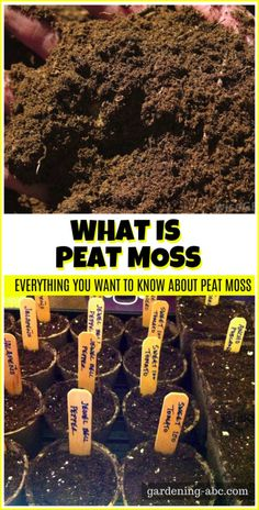 what is peat moss. Is it good to grow plants. Growing Veggies, Growing Plants, Peat Moss, Gardening For Beginners, Pacific Northwest, Outdoor Gardens, Knowledge, Popular, Medium