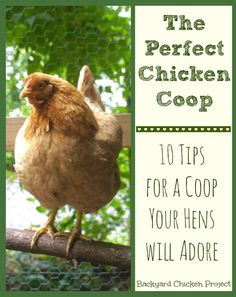 One of the toughest things for new chicken keepers is how to design their chicken coop. This post gives you the 10 essentials to the perfect chicken coop!: