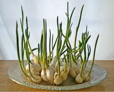 http://www.homegardengreen.com/7-common-vegetables-you-can-regrow-again-and-again/