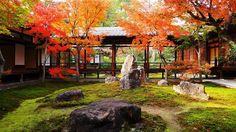 紅葉の京都が演出する景色!今秋は京都へおこしやす~ お寺・グルメ編
