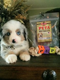 PETA treats for your favorite Beef Jerky, Pet Treats, Peta, Your Favorite, Seasons, Dogs, Animals, Animales, Animaux