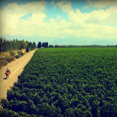 Mendoza, Home of Lujan de Cuyo, Famous for Malbec Grapes!!!