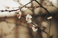 spring by tayaiv.deviantart.com on @deviantART
