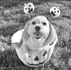Black and White and Ready for Halloween! - YourDesignerDog