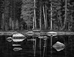 White Boulders and Forest, Dawn, Yosemite National Park, 2003   image by John Sexton