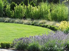 Po mojemu. Ogród subiektywnie świadomy. - strona 12 - Forum ogrodnicze - Ogrodowisko