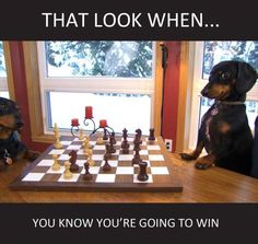 Funny Animal Pictures Of The Day - 28 Pics