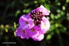 Nature Photography, Rose, Flowers, Plants, Pink, Nature Pictures, Plant, Roses, Wildlife Photography