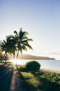 Beach & Holidays I dreaming of summer I tropical surrounding I palm trees I beach side I plants I sea water I sunshine I sundown @monstylepin