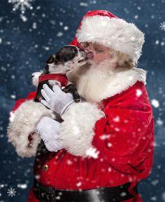 Jetzt täglich Adventskalender-Türchen öffnen und mit etwas Glück tierisch-tolle Preise für Dich und Deinen Vierbeiner abstauben. http://www.dogspot.de/adventskalender/