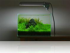 18L planted aquarium