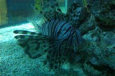 16 Blue Reef Aquarium, Fish, Pets, Animals, Animales, Animaux, Pisces, Animal, Animais