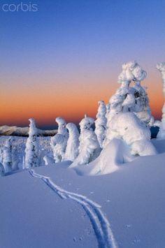 Scenic sunrise in winter with ski tracks in the foreground, Wrangell Island, Southeast Alaska    -  © AlaskaStock/Corbis