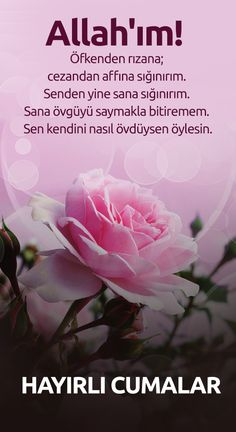 Allah Islam, Rose, Quotes, Plants, Flowers, Sunset Beach, Drink, Fashion, Islamic Pictures