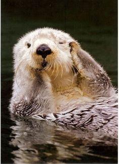 Amazing and funny pictures and videos from around the world: funny animals, beautiful nature scenery, universe etc, etc, etc. Cute Otter, Otter Love, Animals And Pets, Baby Animals, Funny Animals, Cute Animals, Cute Creatures, Beautiful Creatures, Animals Beautiful