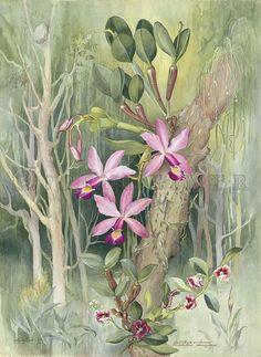 Margaret Mee Joel Oppenheimer Audubon and Natural History Prints