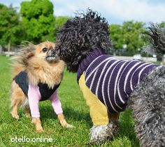 Chihuahua trifft auf Bolonka. It's magic. Enjoy the Walk. #OTELLOONLINE Dog Fashion, Dog Sweaters, Dogs, Animals, Animales, Animaux, Pet Dogs, Doggies, Animal